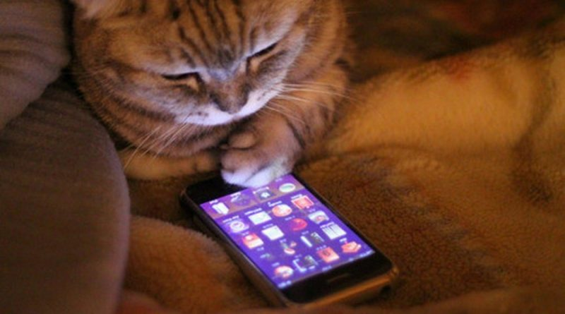 Мобильное приложение для котов iOS/Android СОФТ